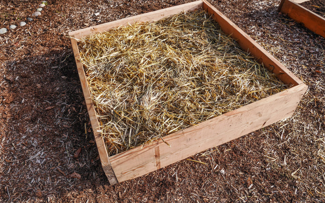 Fixing old raised beds